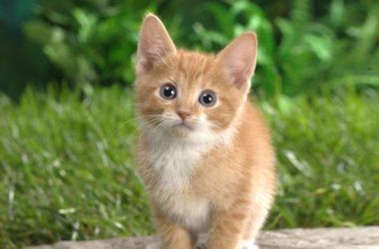 Кот самоубийцы помог спасти своего хозяина