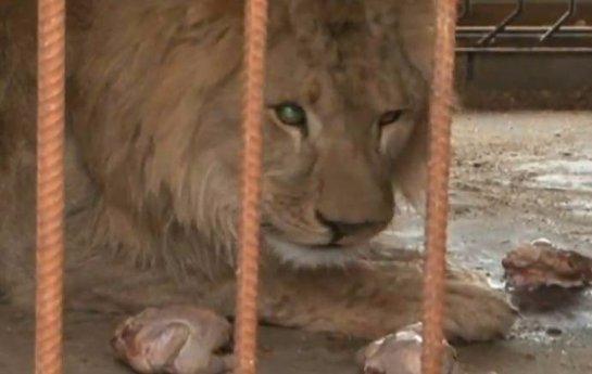 В белгородском зоопарке появился новый питомец