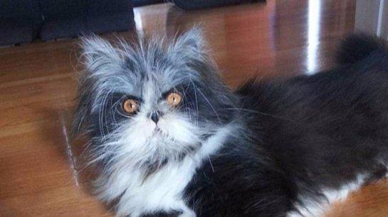Невероятно волосатый кот стал новой звездой интернета