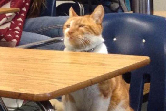 В Калифорнии живет кот-студент по кличке Бубба