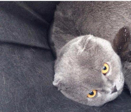 Девушки спасли кота, которого бессердечные хозяева оставили в лесу