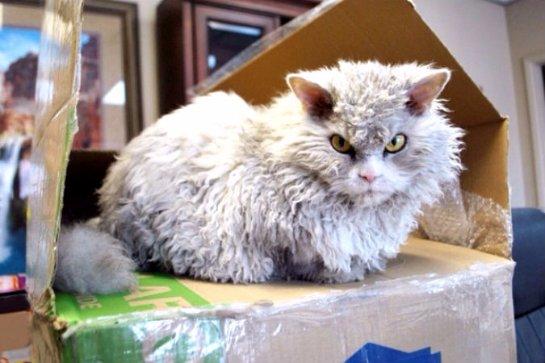 Малоприветливый кот стал звездой интернета