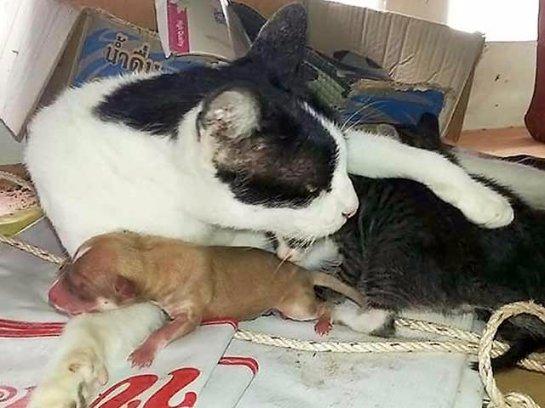 В Тайланде кошка принесла в монастырь брошенного щенка