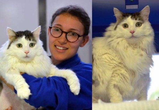 12-килограммовый кот живет в приюте Лондона