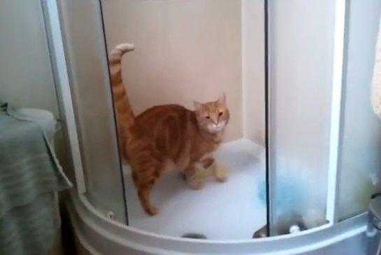 История про кота, который любит принимать душ