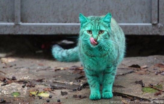 Зеленой кошке вернули естественный окрас