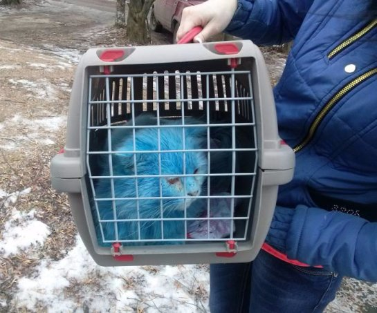 Бездомный синий кот обрел заботливую хозяйку