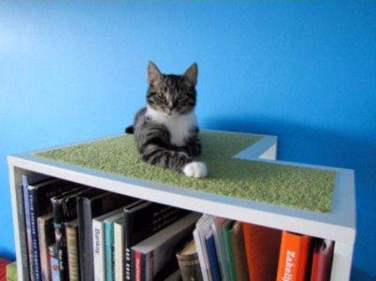 Появилась новая  дизайнерская разработка в виде шкафа для котов