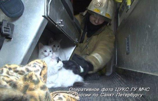 Пожарные спасли кошек из пожара
