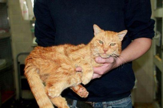 Кота нашли спустя 16 лет после пропажи