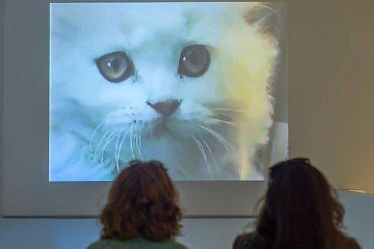 В Нью-Йорке проходит мультимедийная выставка кошек