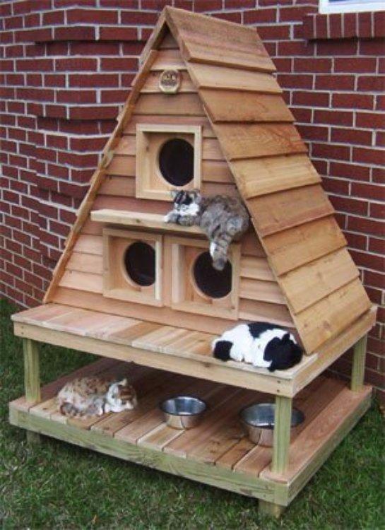 Для котов построили загородный коттедж