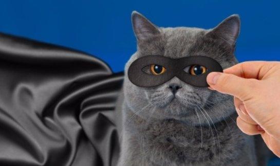Кот отобрал золотой браслет у вороны