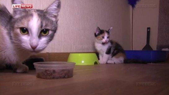 Кошка спасла котят в чужой квартире