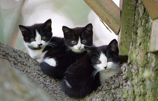 Кошка поселила котят в домике для сов