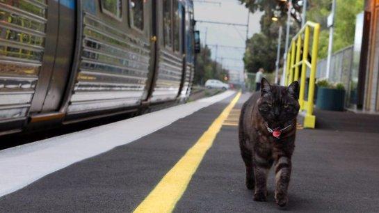 Кот встречает хозяйку на вокзале как знаменитый Хатико