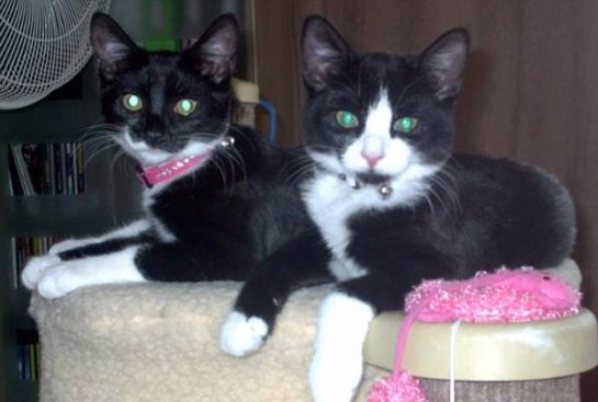 Кошки спасли свою беременную хозяйку
