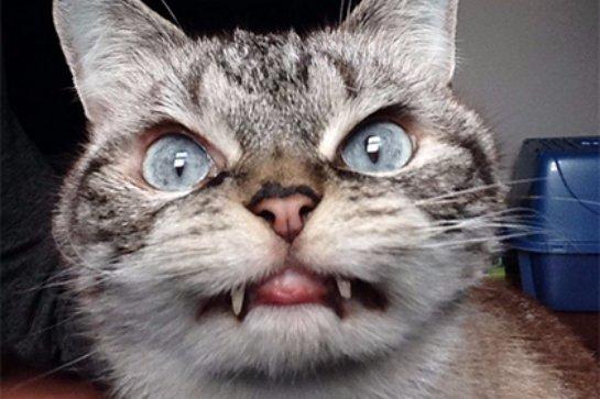 Кошка Локи  обрела популярность среди пользователей Instagram