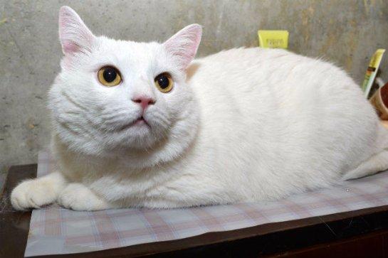 Преданный кот девять дней ждал выздоровления своего хозяина