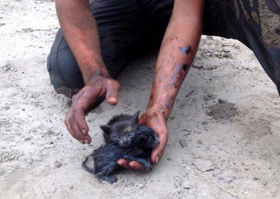 В Нефтеюганске спасли двух котят