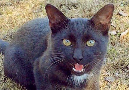 Кота-шкодника выселили из Ботанического сада МГУ