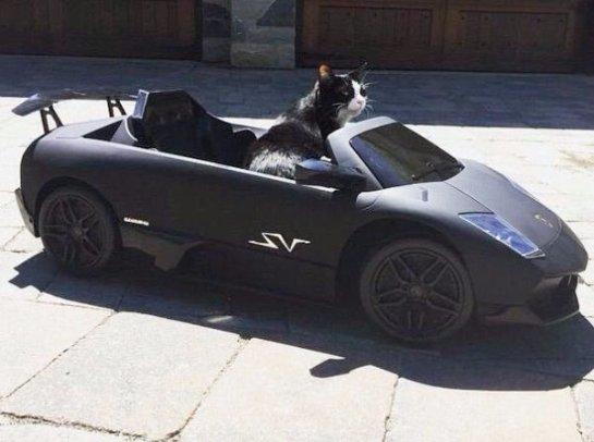 Канадский диджей Deadmau5 купил своему коту машину