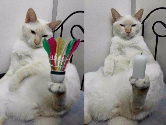 Кот, умеющий держать любые вещи в своих лапках, покорил интернет-пользователей