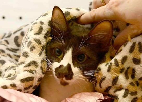 В Сиднее живет кошка с картой Австралии на мордочке