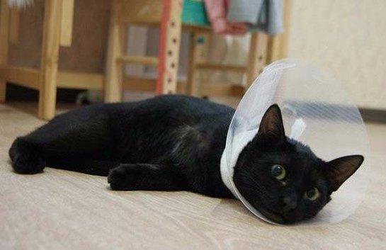 Кот-инвалид постепенно привыкает к обычной жизни