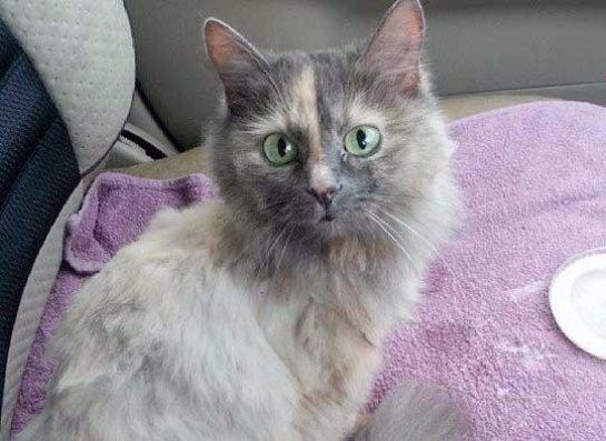 Жительница Новосибирска спасла кошку, которая забралась на верхушку дерева
