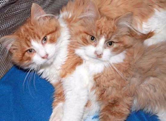 Семья спасла двух замерзающих котят