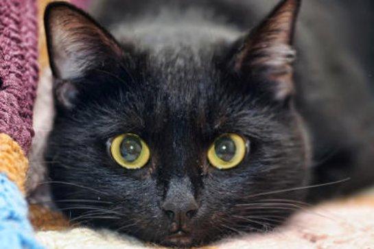 В Томске судья взыскал с хозяина кота 41 тысячу рублей
