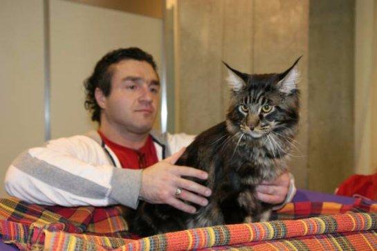 В Перми прошла выставка «Кошкин дом»