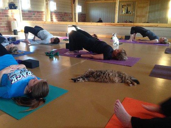 Центр йоги взял кошек из приюта на свои занятия