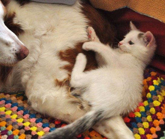 История про котёнка, который очень любит собаку