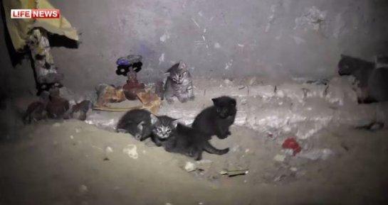 В Казани спасли кошку с котятами