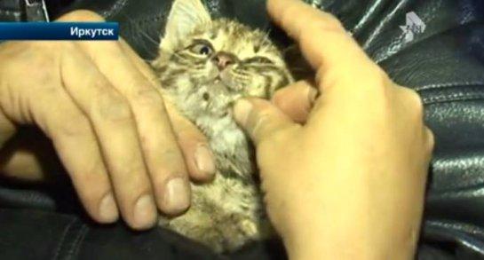 Слесари из Иркутска спасли котёнка