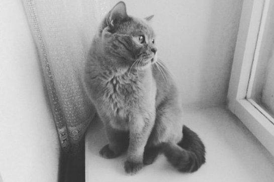Кот Тишка получил звание «Самый находчивый кот страны»