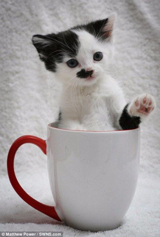 Котёнка из Wood Green сравнили с Гитлером
