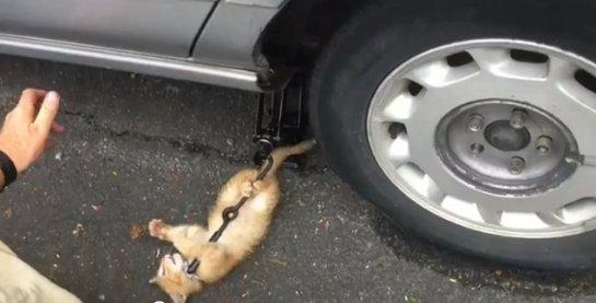 Котенок стал помощником автомеханика