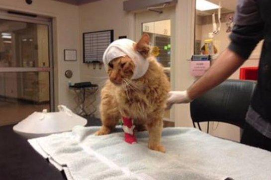 Потерявшийся во время торнадо кот нашел своих хозяев
