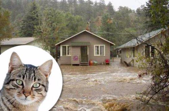 Кошка из Колорадо спасла хозяев от наводнения