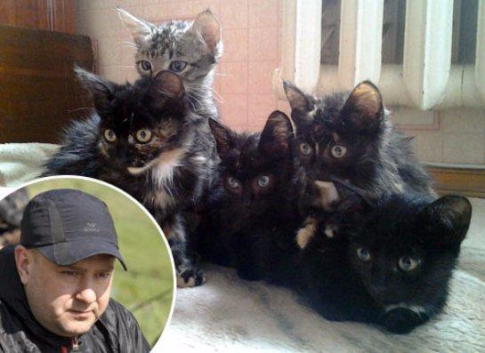 Новосибирский водитель спас пятерых  котят