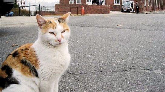 Кошка чудом выжила среди волн
