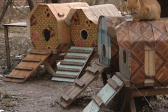 Семейная пара из Харькова построила кошачий поселок