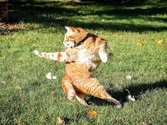 Кот в забавной позе стал новой звездой интернета