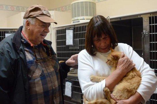 Рыжая кошечка вернулась домой спустя восемь лет после пропажи