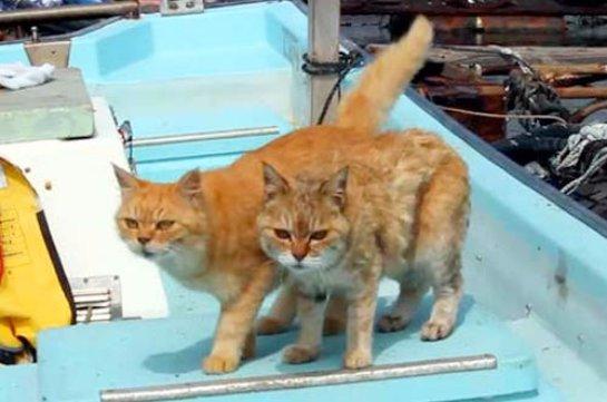 Две кошечки живут на рыбной ферме в Японии