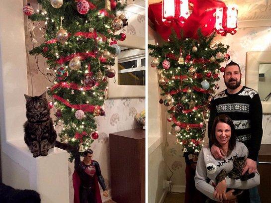 Британская семья из-за кота установила ёлку на потолке