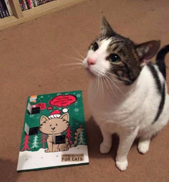 Посылка для кота